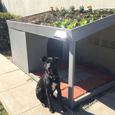 Green-roof dog house with rooftop garden!