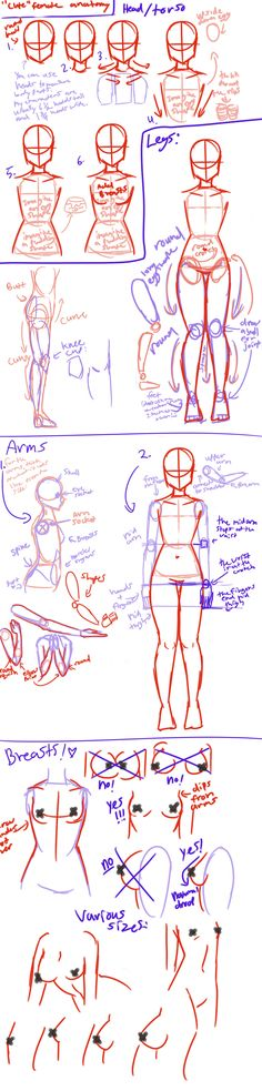 """Cute"" female anatomy tutorial by AngelicCarrot.deviantart.com on @deviantART"