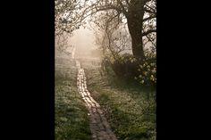 Orchard Path at Sunrise. Great Dixter, Northiam. By photographer Carol Casselden