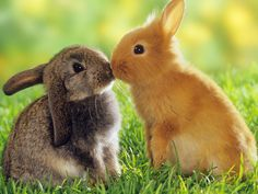 Google Image Result for http://www.listofimages.com/wallpapers/2012/01/bunnies-cute-lopears-rabbits-1920x2560.jpg