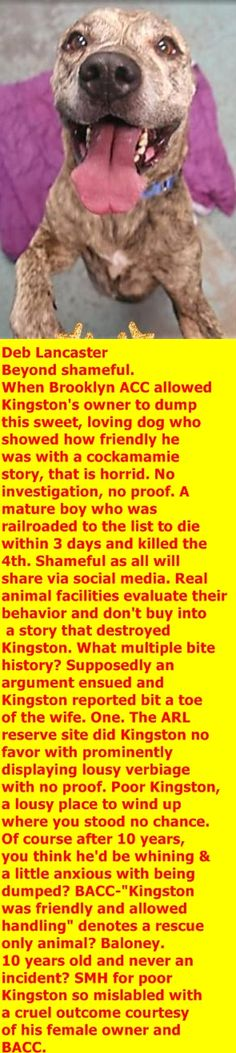 MURDERED 12/04/2017 --- Hello, my name is Kingston. My animal id is #15000. I am a desexed male brindle dog at the Brooklyn Animal Care Center. The shelter thinks I am about 10 years old.  I came into the shelter as a owner surrender on 30-Nov-2017, with the surrender reason stated as animal behaviour – destructive tendencies.  http://nycdogs.urgentpodr.org/kingston-15000/