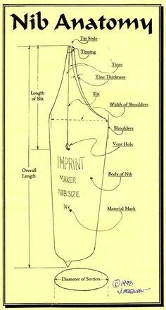 Fountain Pen Nib anatomy! #WilliamHannahUK #BecauseWritingHelps #fountainpen #pen #nib #pennib #anatomy #written #planneraddict #stationeryaddict
