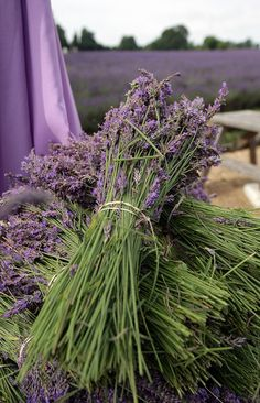 mmm love to tuck a little muslin sack of this lavendar into my pillow case--so soothing to sleep with this scent