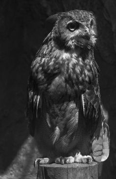 How beautiful is this animal?! I love Owls...such a weird thing to love lol