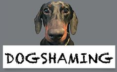 Dogshaming - a hilarious site! I am literally in tears laughing so hard.  @Stacy Baugh  @Samatha Serio @Chelsea Hail @Chonte Reeves
