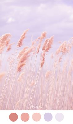 Siergras ~ Zachte tinten voor in het interieur. Lila zalm roze / oranje