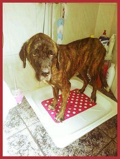Hemos cogido a Camino en pleno baño en su casa de #acogida. :) http://protectoralacandela.org/al-agua-patos/