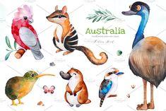 "by Kate_Rina on ""AUSTRALIA"" cute watercolor collection! Watercolor collection with 52 separate elements : cute animals (Koala, kiwi bird, Cute Australian Animals, Australian Nursery, Baby Animals, Cute Animals, Kangaroo Baby, Kiwi Bird, Tasmanian Devil, Animal Wallpaper, Cockatoo"
