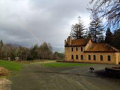 Rainbow over the Napa Valley at Wallis Family Estate