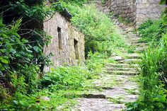Swallowed by nature: The steep paths heading up the hilly terrain have been overtaken by weeds after being abandoned many years ago