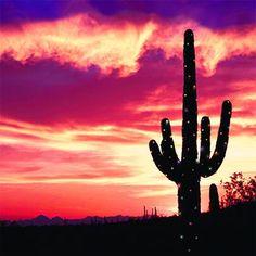 Sahuaro cactus decorated with twinkle lights.