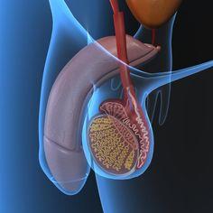 El seminograma, también denominado espermiograma, es el estudio básico que se realiza a una muestra de semen con el fin de poder evaluar su