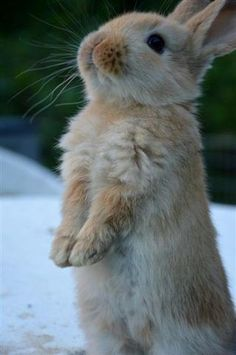 Little begging bunny