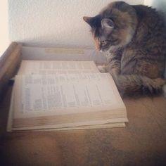studying hard...