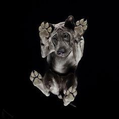 Under dogs  des photos de chiens par dessous par Andrius Burba  2Tout2Rien