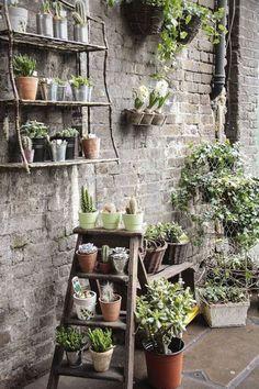 Cactusii sunt plante ideale pentru orice sezon deoarece nu necesita ingrijiri speciale. Haideti sa vedem care sunt cele mai creative ghivece de cactusi: