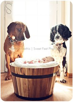 Precious First Family Portrait! <3  |Newborn Photography | Baby | Pet | Dogs | Puppy | Sibling Photo Session Idea | Birth Announcement Idea