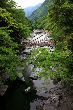 Walk across a vine bridge! This vine bridge is in Iya Valley, Tokushima, Japan