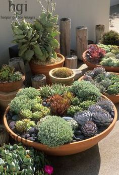 Shallow bowl container pot planter low growing drought tolerant succulents stone gravel mulch hot dry sun lover