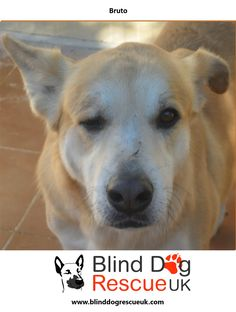Blind Dog Rescue UK - Adopt a blind dog Dog Rescue Uk, Dog Activities, 7 Year Olds, Cute Dogs, Shelter, Labrador Retriever, Adoption, Pets, Animals