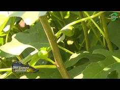 Plant Leaves, Home And Garden, Youtube, Plant, Life, Youtubers, Youtube Movies