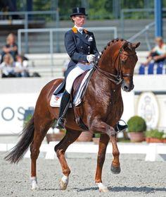 Elite Stallions: Single Stallion Page. Jazz, KWPN breed