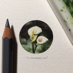 Paintings for ants: Arum Lily - flowering all over Cape Town at this time of year. 26 x 26 mm.  #365postcardsforants #miniature #watercolour Lorraine Loots