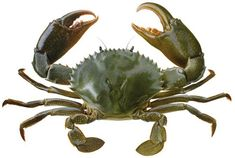 The Health Benefits Of Eating Crabs