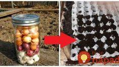 Záhradkár ukázal perfektný trik, ako vysadiť cibuľoviny v októbri: Uložte do kartónu od vajec a nemusíte sa ďalej starať, na jar máte v záhrade hotovú pastvu pre oči!