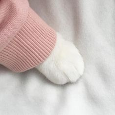 ☆*~ KAWAII ~*☆ cat paw in a sweater - pink - pastel - soft - girly - animal - pet - kitten - cute - aesthetic - kawaii I Love Cats, Cute Cats, Funny Cats, Adorable Kittens, Crazy Cat Lady, Crazy Cats, Cat Paws, Dog Cat, Ac New Leaf