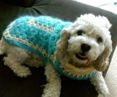 Granny Square Dog Crochet Sweater I based the design on the Urban Granny Dog Sweater which is a free crochet pattern from Lion Brand Yarn. I used it to help me get the size right and to get the basic idea for the neck although I di… Crochet Dog Clothes, Crochet Dog Sweater, Dog Sweater Pattern, Crochet Shirt, Dog Pattern, Sweater Patterns, Dog Crochet, Crochet Sweaters, Mohair Sweater