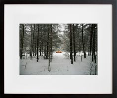 """""""Forest. Exclusion Zone, Chernobyl"""" by Donald Weber"""