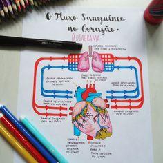 FLUXO SANGUÍNEO NO CORAÇÃO O lado direito do coração recebe o sangue pobre em oxigênio das veias do corpo inteiro. Ele bombeia o sangue pelas artérias pulmonares até os pulmões, onde o sangue é oxigenado novamente. O lado esquerdo do coração recebe esse sangue rico em oxigênio dos pulmões. Ele bombeia o sangue pela aorta de volta para o resto do corpo por meio de uma rede complexa de artérias, arteríolas e capilares. Medicine Notes, Medicine Student, Study Biology, Science Biology, Mental Map, Science Notes, Medical Anatomy, School Study Tips, Anatomy Study