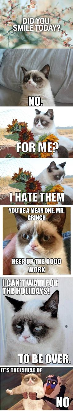 The Best Of Grumpy Cat…
