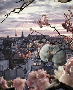 Paris Pictures, Cool Pictures, Paris Love, Visit France, Evening Sky, Animals Of The World, Holiday Destinations, City Lights, Wonders Of The World