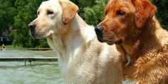 Dogs Wallpapers HD | Wallpapers HD