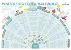 Phänologischer Kalender als PDF - super interessant! Zum Download und als Referenz einfach nur praktisch, finde ich!