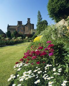 Close view of flowers in the walled garden at Chartwell, Kent, the family home of Sir Winston Churchill from 1922 until 1965, one of my favourite places to visit