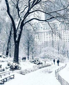 Blizzard Beauty in Central Park  #CentralPark #stormjonas #NYC #blizzard #blizzard2016 #manhattan #hangitupLA by hangitupla