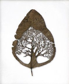 你有沒有聽過所謂的葉雕藝術家呢? 七月時在Laughing Squid看到了Lorenzo Durán不斷更新的葉雕系列,Naturayarte, 我非常喜愛, 也很開心Lorenzo願意接受我小小的採訪, 讀者們請享用!