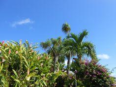 Vu dans le jardin de Panoramic...