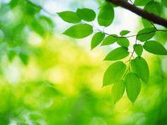 Respiração e transformação de carbono purificada - Parte 3 • Lucis Trust