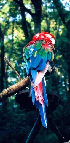 Just love the multitude of colours .Parrot