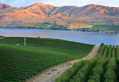 Washington state's 55-mile-long Lake Chelan, tucked into the back side of the Cascade Range northeast of Seattle. Chelan is less than a mile wide almost its entire length, & plunges to a depth of 1,486 feet. Because of its unique position it is set in completely different ecosystems at each end — montain at its northwestern inlet, arid shrub-steppe at the opposite. The quiet valley at the far end, Stehekin, is a lovely vacation retreat that can be reached only by ferry or floatplane.
