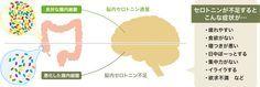 """【最新研究情報】幸せは腸で作られる!? """"幸福物質""""セロトニン"""