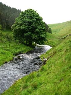 grassy slope by a brook