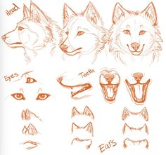 Drawing Step By Step Wolf Tutorials 25 Ideas Animal Sketches, Art Drawings Sketches, Cute Drawings, Animal Drawings, Wolf Drawings, Drawing Animals, Drawing Reference Poses, Drawing Poses, Drawing Step