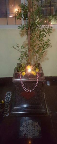 Tulasi Plant, Importance Of Art, Terrace Decor, Flora Garden, Weird Plants, Pooja Room Design, Kerala House Design, Color Plan, Puja Room