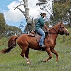 A beginner's guide on how to choose, care for and buy a horse.