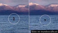 Varias personas ven una extraña criatura en un lago de Albania se trata de la versión europea de Nessie?